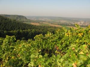 Weingut Neumann